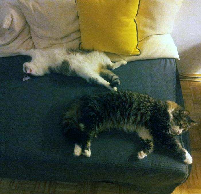 mačka na kavču