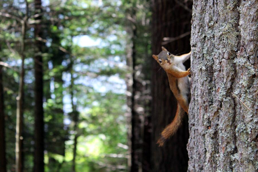 Moj otrok je veverica